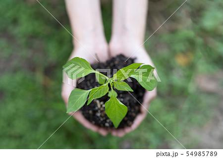 植物の苗 手 54985789
