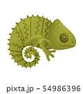 Green Chameleon. Vector illustration on white background. 54986396