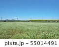 秋ソバ畑の新幹線 55014491