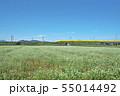秋ソバ畑の新幹線 55014492