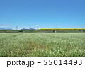 秋ソバ畑の新幹線 55014493