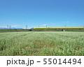 秋ソバ畑の新幹線 55014494