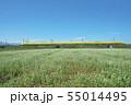 秋ソバ畑の新幹線 55014495