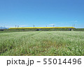秋ソバ畑の新幹線 55014496