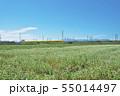 秋ソバ畑の新幹線 55014497