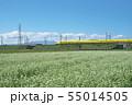 秋ソバ畑の新幹線 55014505