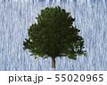 樹木 55020965