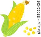 生のトウモロコシ 55022426