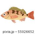 メバル 55026652
