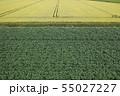 畑の模様 55027227