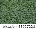 ジャガイモ畑 55027228