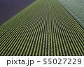 畑の模様 55027229