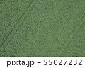 ジャガイモ畑 55027232