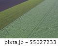 畑の模様 55027233