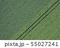 ジャガイモ畑 男爵とメークイン 55027241