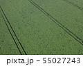 ジャガイモ畑 55027243