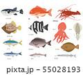 海の魚セット 55028193