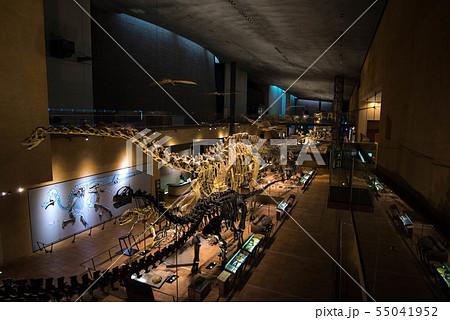 恐竜 化石 55041952