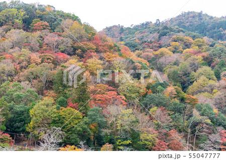 京都嵐山の紅葉 55047777