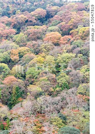 京都嵐山の紅葉 55047819