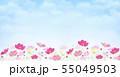 背景素材_コスモス畑 55049503