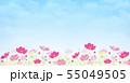 背景素材_コスモス畑 55049505