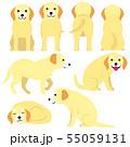 いろいろなポーズの老犬 55059131