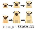 パグの加齢の過程 55059133
