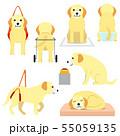 老犬と介護グッズ 55059135