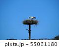 コウノトリ 親子 55061180
