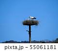 コウノトリ 親子 55061181