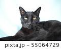 のんびりしている黒猫の写真 55064729