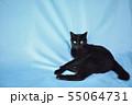 のんびりしている黒猫の写真 55064731