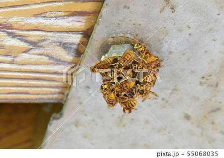 作り方 蜂の巣 の