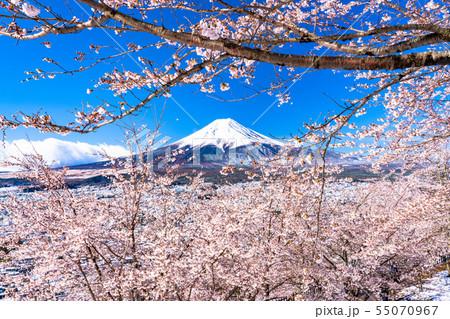 《山梨県》富士山を望む・桜と雪の新倉山浅間公園 55070967