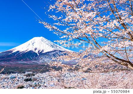 《山梨県》富士山を望む・桜と雪の新倉山浅間公園 55070984