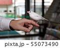 手乗り白文鳥 55073490