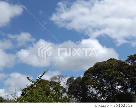 夏の稲毛海浜公園の青空と白雲 55102618