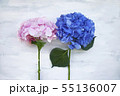 Pastel colored Hydrangea Flowers on White painted table 55136007