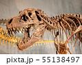 恐竜の威嚇 55138497
