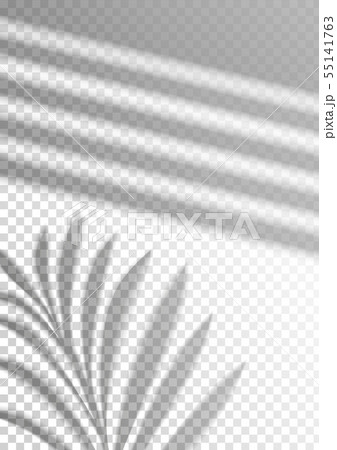 The transparent shadow overlay effect. Tropic leaf 55141763