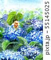 紫陽花とアマガエル 55145025