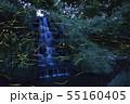 【日本の夏の風物詩】ゲンジボタルの乱舞 55160405