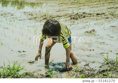 農業体験 田植えをする子供 55161270