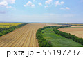 Aerial view of a field of wheat Harvesting 55197237