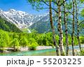 《長野県》新緑の上高地・岳沢と白樺 55203225