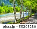 《長野県》新緑の上高地・岳沢と白樺 55203230