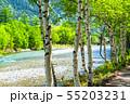 《長野県》新緑の上高地・岳沢と白樺 55203231