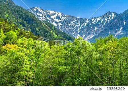 《長野県》新緑の上高地・岳沢と緑 55203290