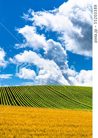 《北海道》夏の大空と田園風景・美瑛の丘 55203389